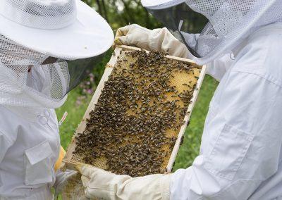 beekeeper-2650664_1920