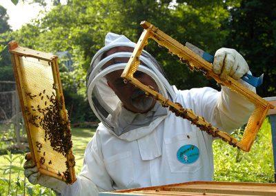 beekeeper-682943_1920