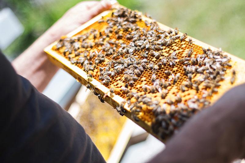 Comment bien inspecter une colonie