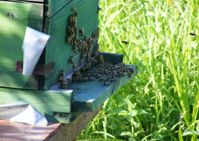 bees-88241_1920